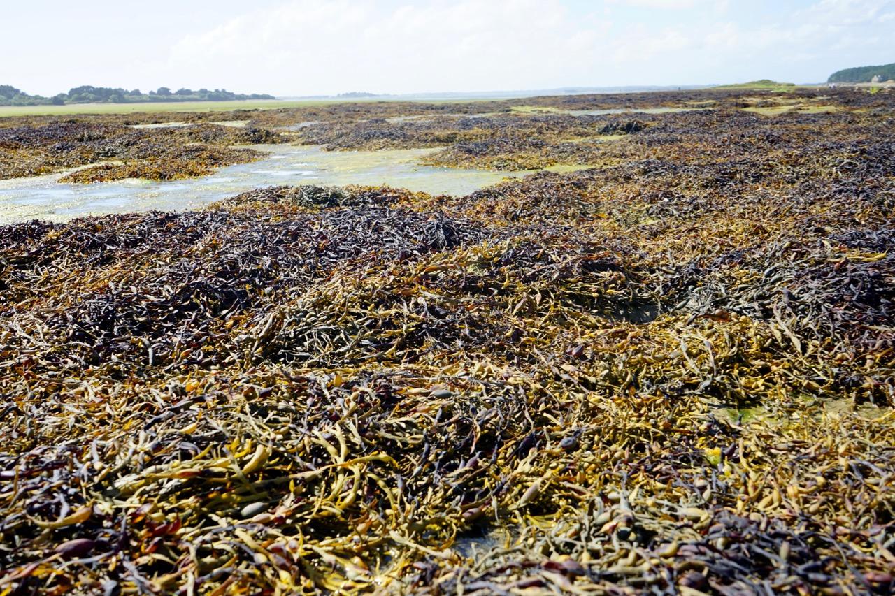 algen-bretagne