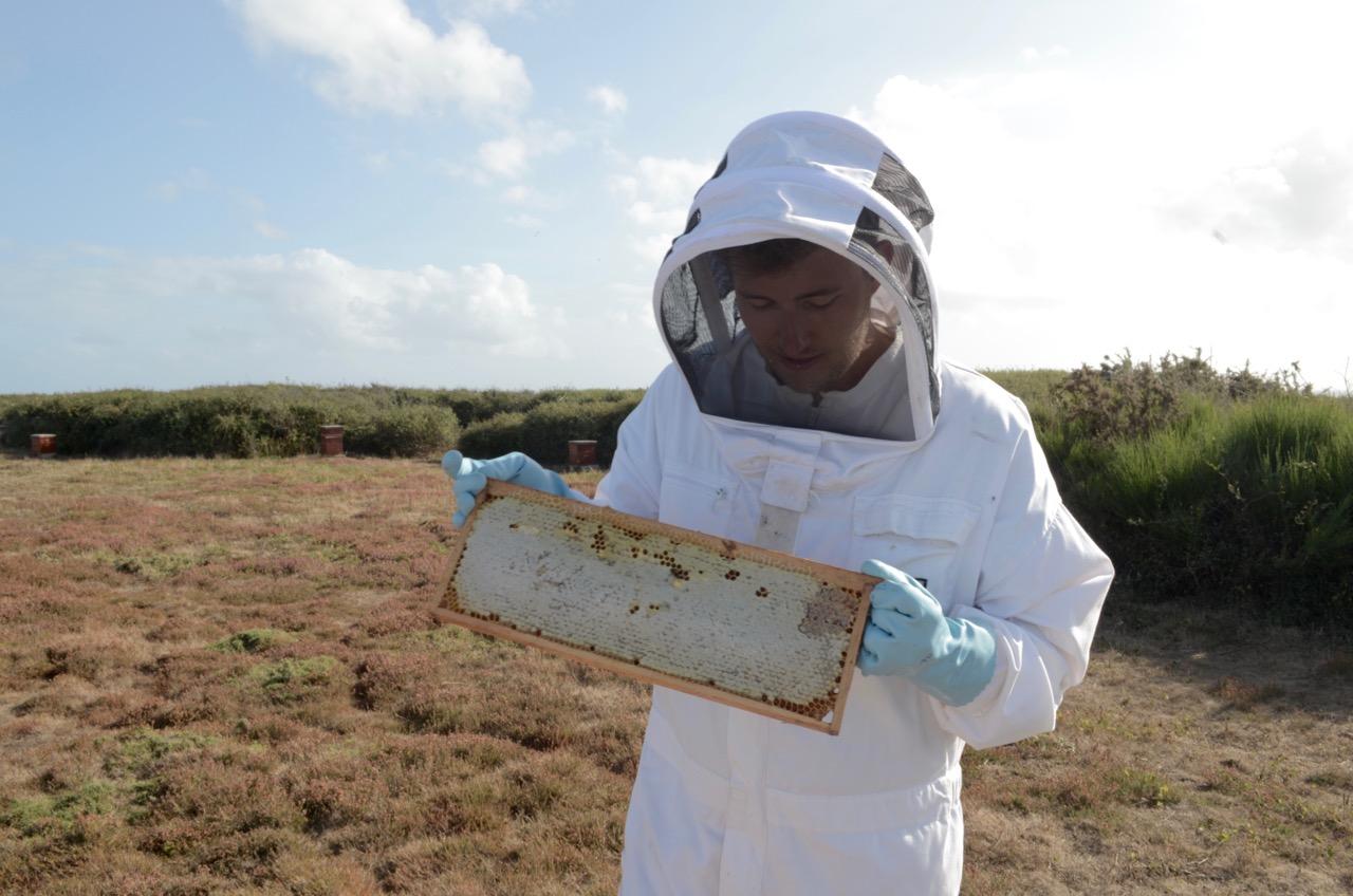 steven-erkundet-bienenwaben