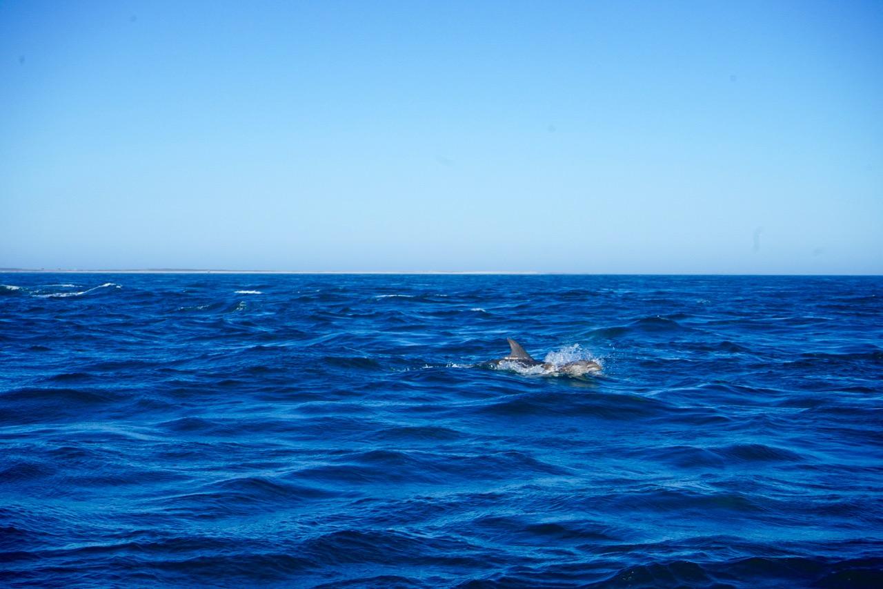 delfinbaby-bretagne