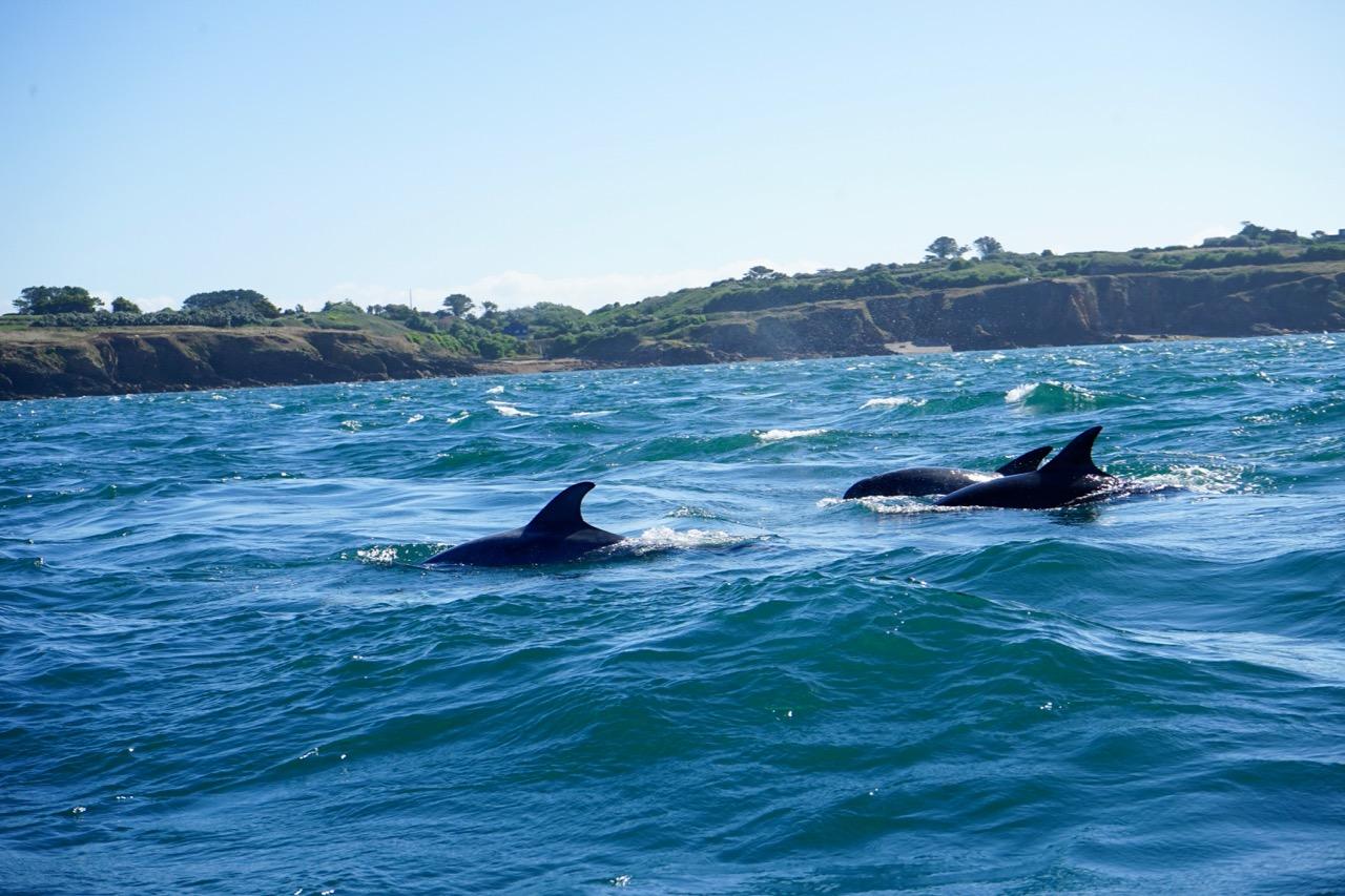 delfine-bretagne-iroise