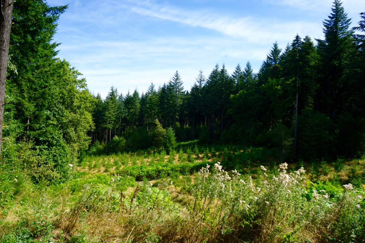 22-wald-limousin