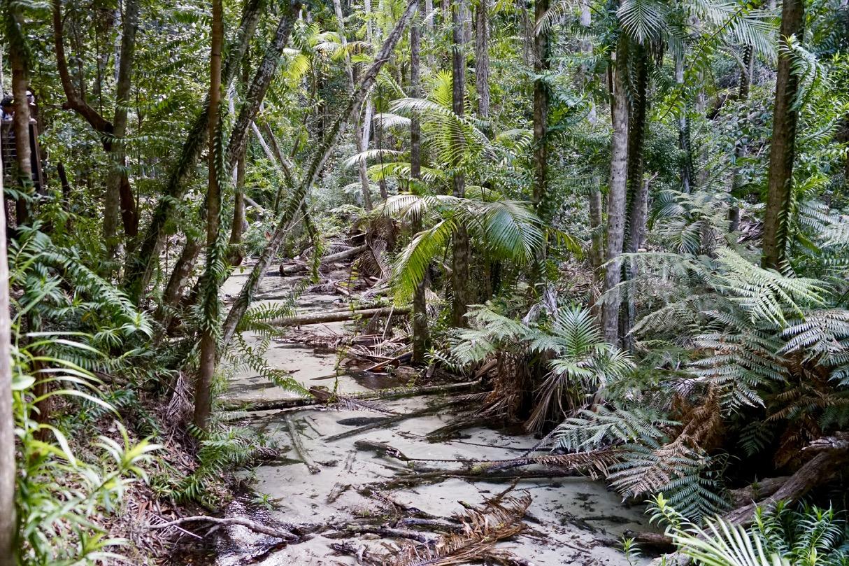 Regendwald Queensland auf Fraser Island