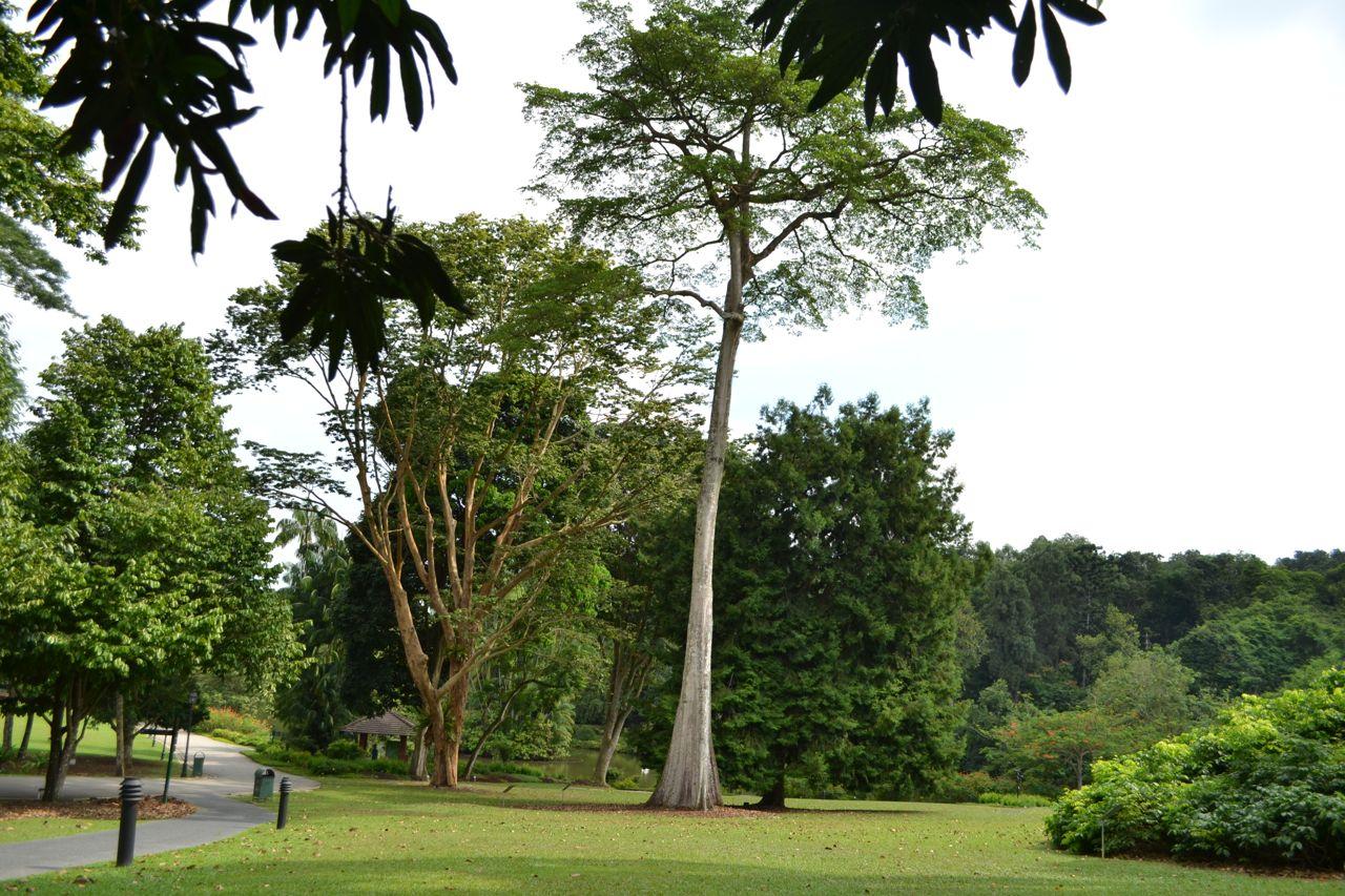 Singapur Botanic Garden