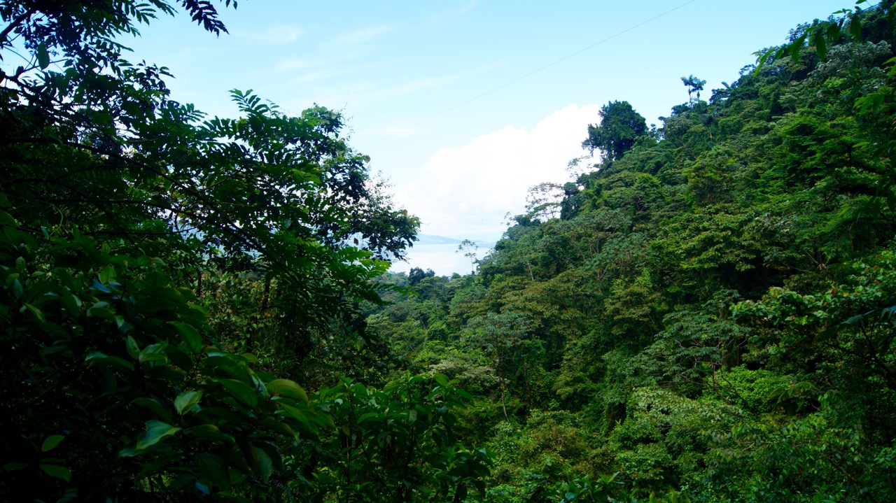 Costa-Rica-Regenwald - 13
