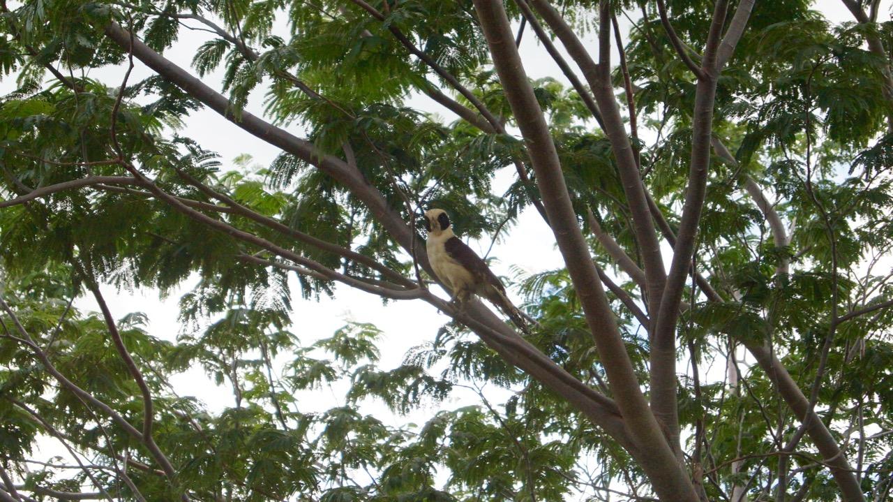 Palo-Verde-Nationalpark-Vogel - 14
