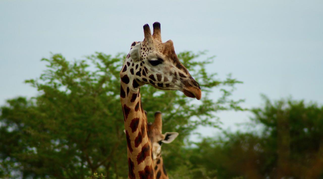 reise tipps reise Uganda