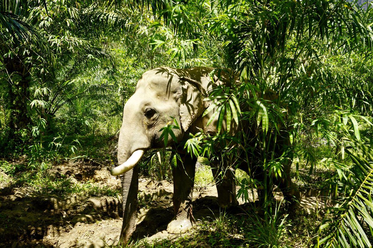 elefantenreiten thailand