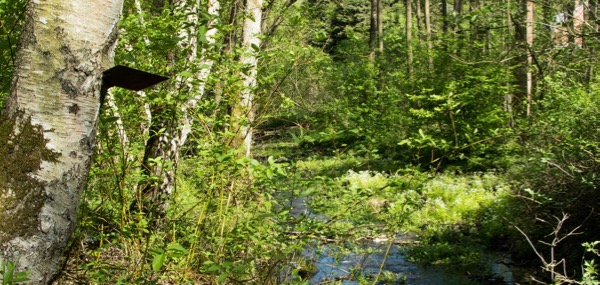 Waldgaststätte Zur alten Eiche